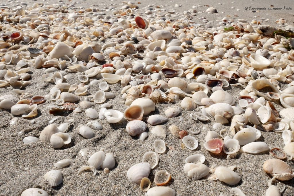 Florida - Fort Myers Beach - Sanibel {EamK on Tour}